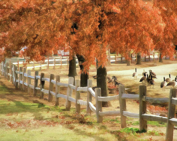 Canada Goose Poster featuring the photograph An Autumn Day At The Park by Donna Kennedy