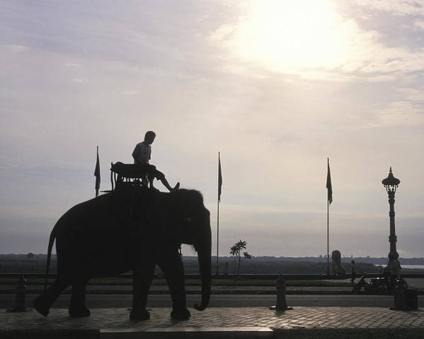 Royal Palace Poster featuring the photograph An Elephant At The Royal Palace by Richard Nowitz
