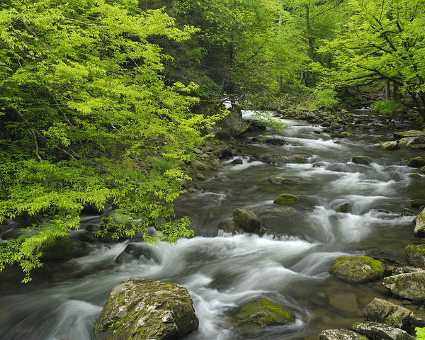 River Poster featuring the photograph Ancient Cascades In Great Smoky Mountains by Darrell Young