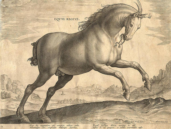 Horse Poster featuring the digital art Antique Horse Engraving - Equus Regius by Village Antiques