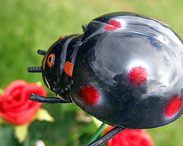 Photographer Poster featuring the photograph Aphid Days by Jez C Self
