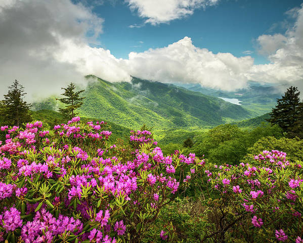 Appalachian Mountains Spring Flowers Scenic Landscape Asheville North Carolina Blue Ridge Parkway Poster
