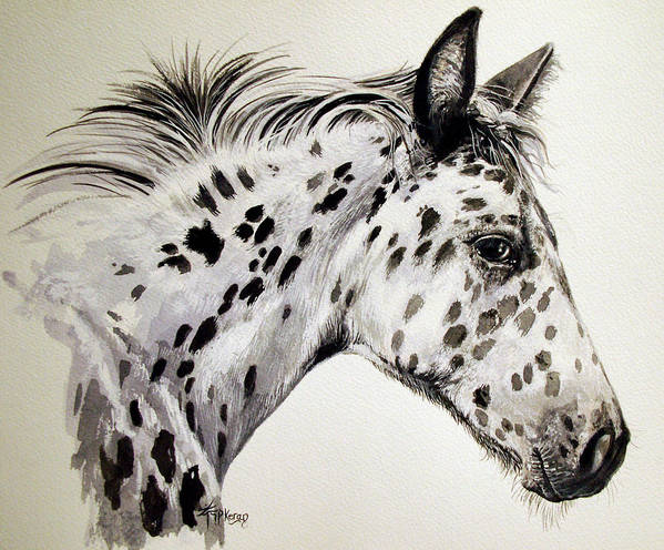 Appaloosa Horse Poster featuring the painting Appaloosa by Keran Sunaski Gilmore