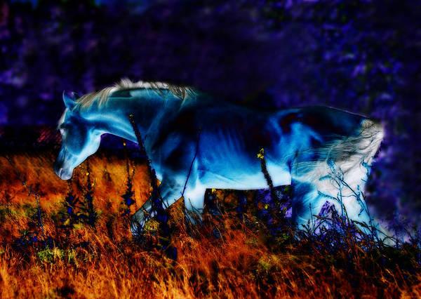 Digital Art Poster featuring the photograph Arabian Stallion by ELA-EquusArt