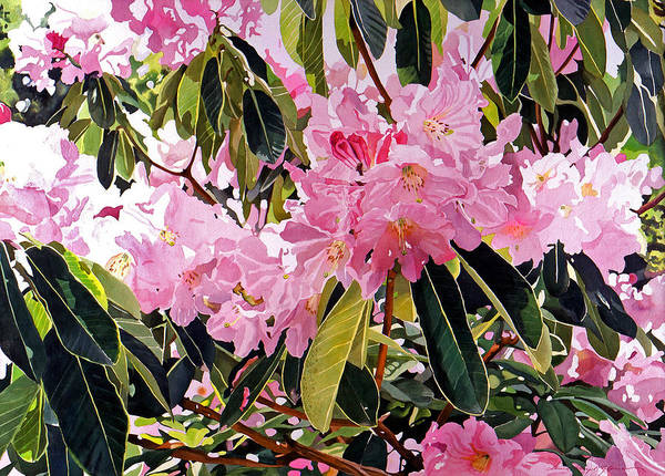 Flowers Poster featuring the painting Arboretum Rhododendrons by David Lloyd Glover