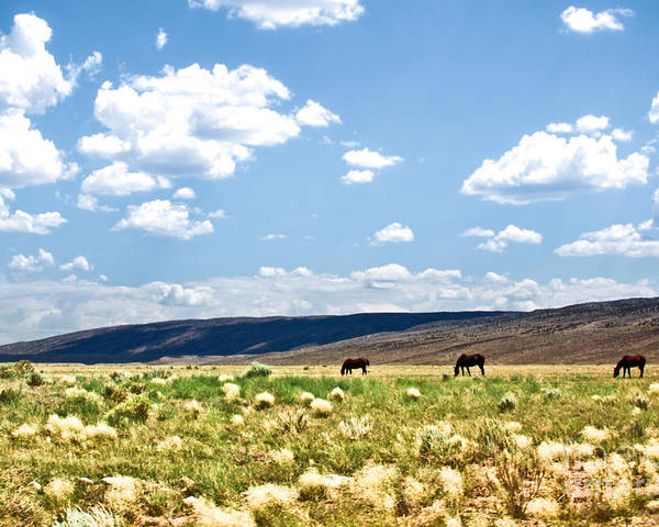 ryankellyphotography@gmail.com Poster featuring the photograph Arizona Desert Horses by Ryan Kelly