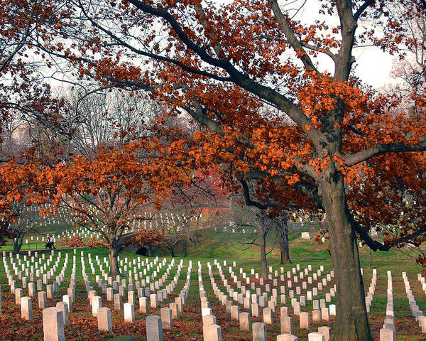 Veteran Poster featuring the photograph Arlington Cemetery In Fall by Carolyn Marshall