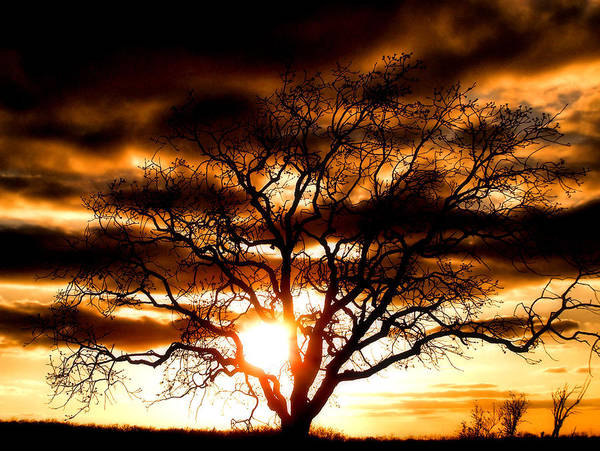 Sunset Poster featuring the photograph Arms Wide Open by Karen Scovill