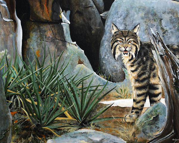 Bobcat Animals Painting Rocks Yucca Acrylic Poster featuring the painting Around The Corner by Michael Blanco