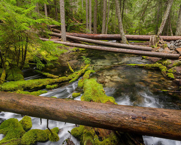Clearwater Creek Poster featuring the photograph As The Creek Flows by Greg Nyquist