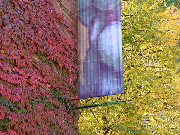 Red Leaves Poster featuring the photograph Autum Colors by Robyn Leakey