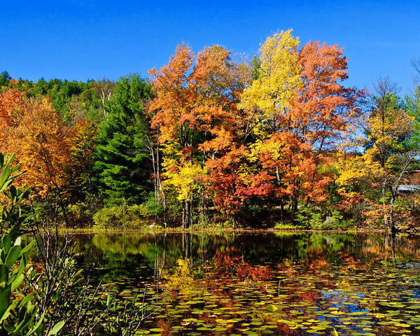 Adirondacks Poster featuring the photograph Autumn - Fall Color by Louis Dallara