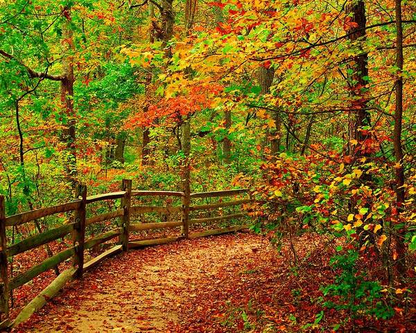 Autumn Landscapes Poster featuring the photograph Autumn Bend - Allaire State Park by Angie Tirado