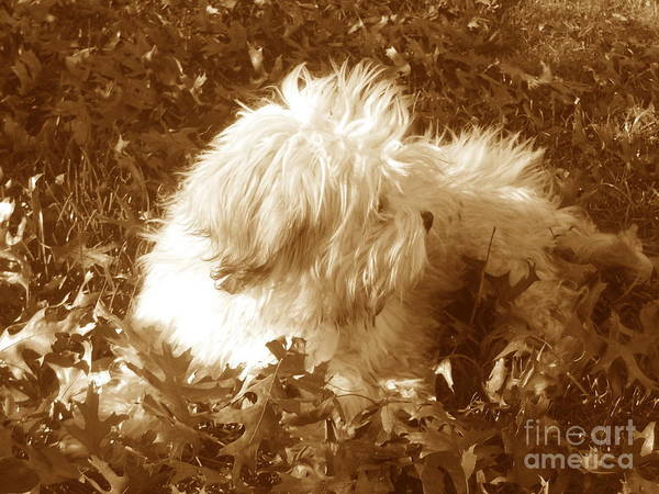 Dog Teddy Outdoors Leaves Fall Autumn Animals Poster featuring the photograph Autumn Breeze 2 by Reina Resto