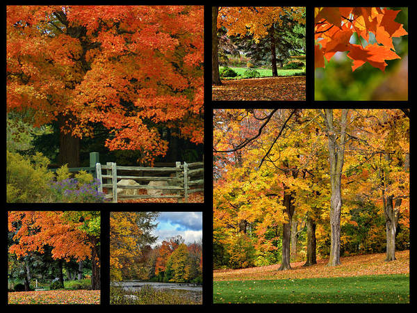 Autumn Poster featuring the photograph Autumn Collage by Maria Keady