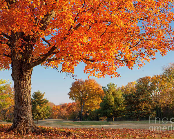 Autumn Poster featuring the photograph Autumn Dawn by Brian Jannsen