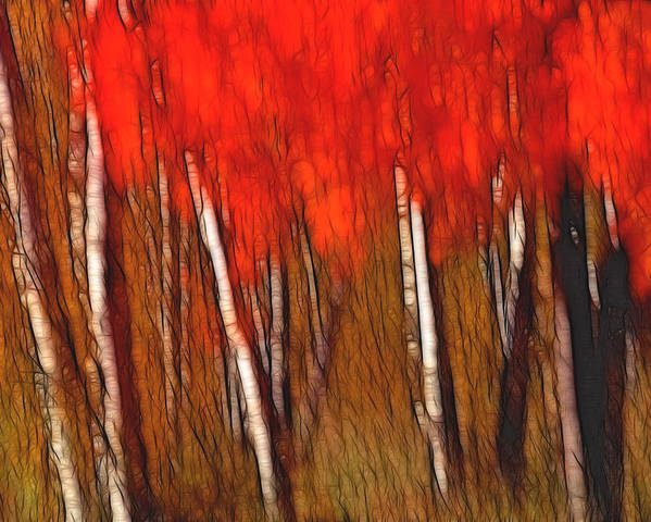 Trees Poster featuring the photograph Autumn Fire by Bill Morgenstern