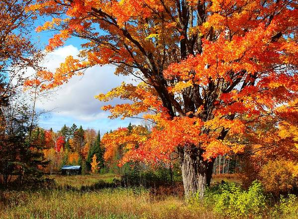 Fall Poster featuring the photograph Autumn Glory by Gigi Dequanne