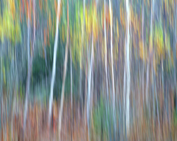 Forest Pastels Form An Autumn Impression Poster featuring the photograph Autumn Impression by Bill Morgenstern