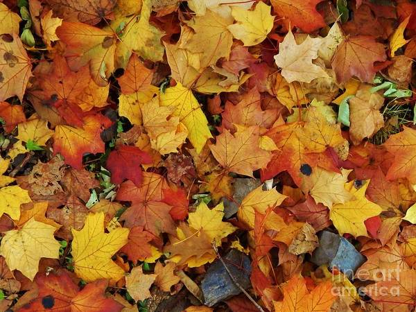 Leaves Poster featuring the photograph Autumn In Canada by Reb Frost