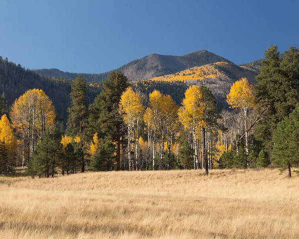 Fall Poster featuring the photograph Autumn In Lockett Meadow by Susan Westervelt