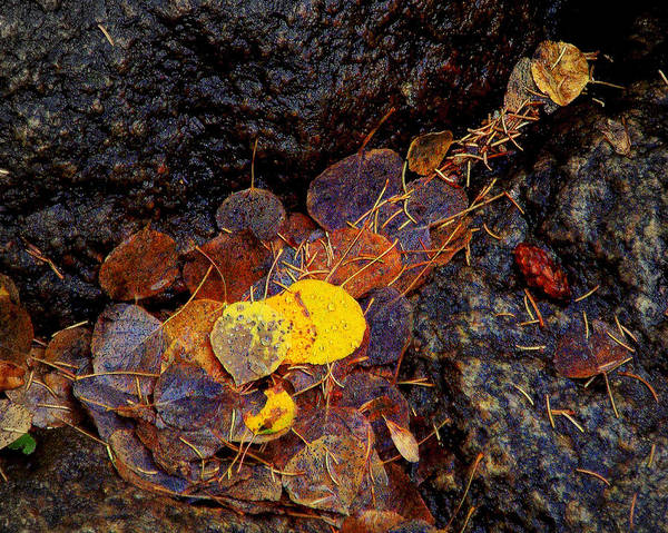 Autumn Poster featuring the photograph Autumn Jewels.. by Al Swasey