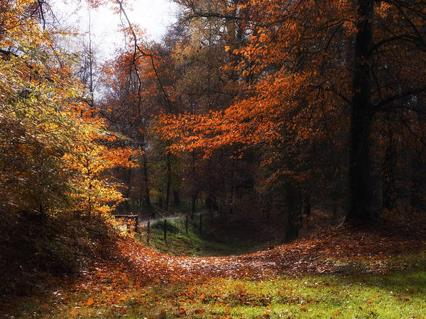 Nature Poster featuring the photograph Autumn Landscape by Artecco Fine Art Photography