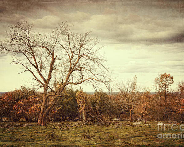 Autumn Poster featuring the photograph Autumn Landscape In Late November by Sandra Cunningham
