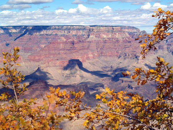 Grand Canyon National Park Poster featuring the photograph Autumn Leaves by Carrie Putz