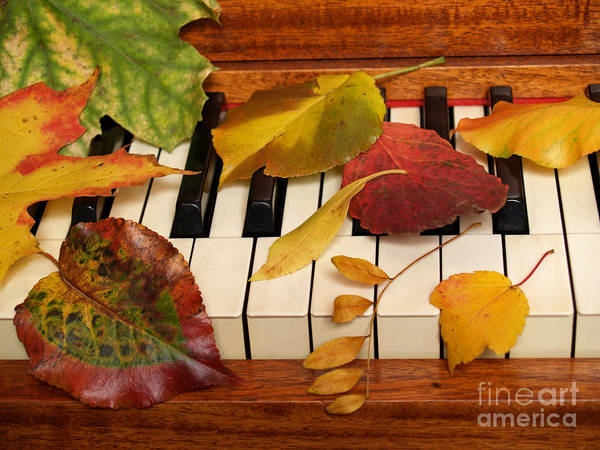 Piano Poster featuring the photograph Autumn Leaves Tickle The Ivories by Anna Lisa Yoder