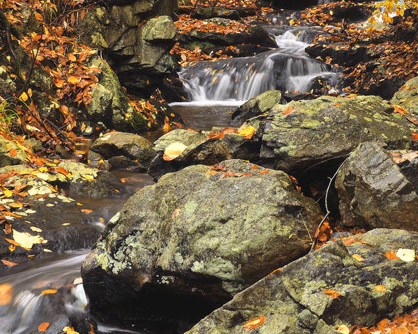 Autumn Poster featuring the photograph Autumn On The Rocks by Stephen Vecchiotti