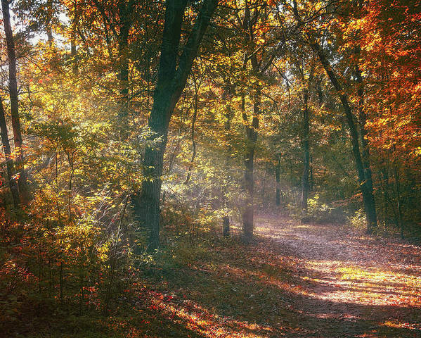 Autumn Poster featuring the photograph Autumn Path by Scott Norris