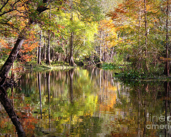 Autumn In Florida Poster featuring the photograph Autumn Reflection On Florida River by Carol Groenen