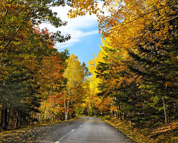 Acadia National Park Poster featuring the photograph Autumn Scenic Drive by George Oze