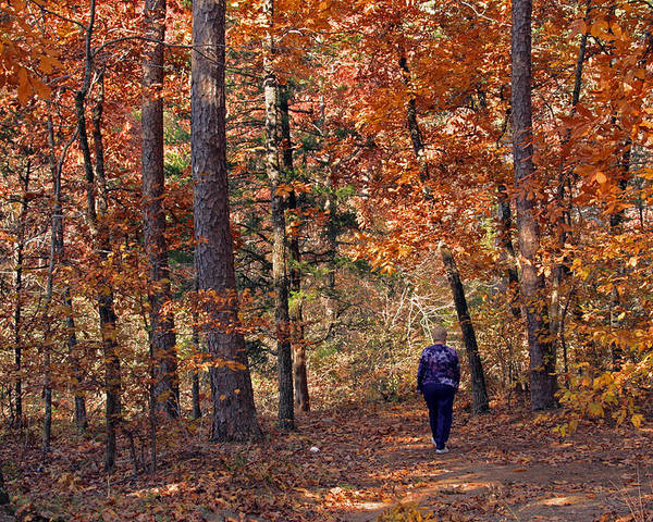 Fall Poster featuring the photograph Autumn Stroll by Gayle Johnson