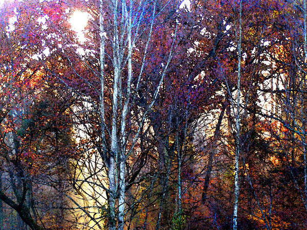 Autumn Poster featuring the painting Autumn Sunlight by Jane Schnetlage