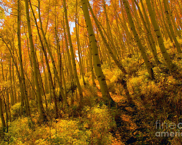 Autumn Poster featuring the photograph Autumn Trail by David Lee Thompson