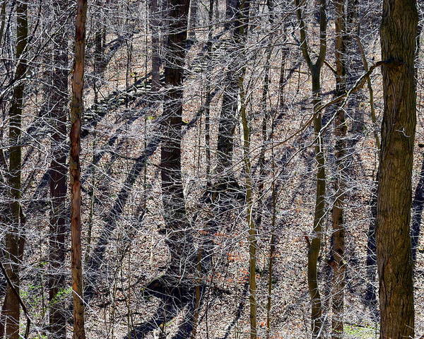 Trees Poster featuring the photograph Autumn Trees 1 by James Richmond