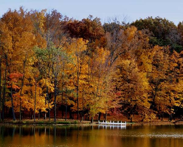 Autumn Trees Poster featuring the photograph Autumn Trees by Sandy Keeton
