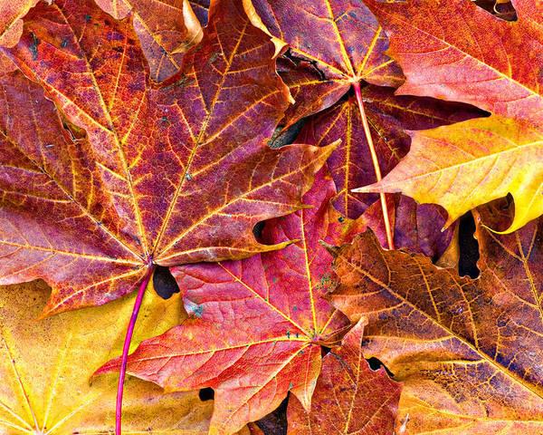 Autumn Poster featuring the photograph Autumnal Carpet by Meirion Matthias