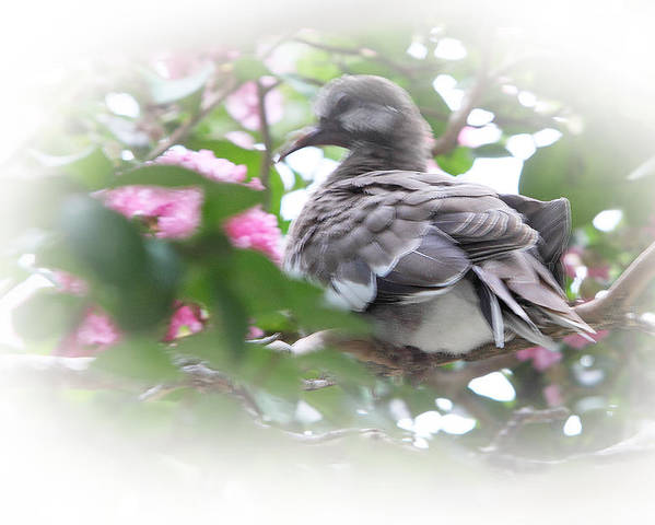 Baby Poster featuring the photograph Baby Bird In Crape Myrtle Tree by Linda Phelps