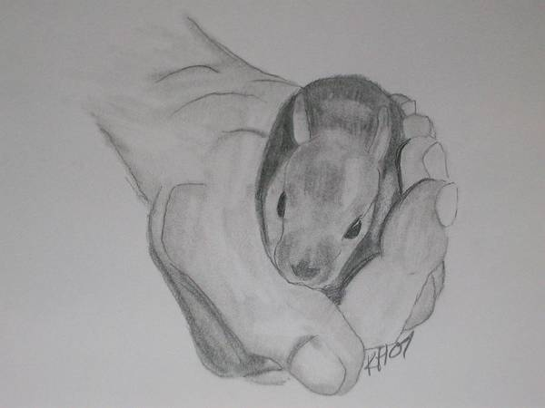 Poster featuring the drawing Baby Bunny by Kristen Hurley