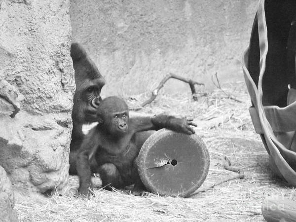Baby Poster featuring the photograph Baby Gorilla And Mom by Jennifer Craft