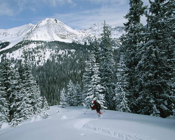 Model Released Photography Poster featuring the photograph Backcountry Skiing Into An Evergreen by Tim Laman