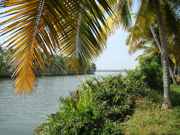 Waterscapes Poster featuring the photograph Backwaters Of Kerala-2 by Reshmi Shankar