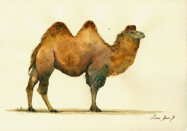 Bactrian Camel Art Wall Poster featuring the painting Bactrian Camel by Juan Bosco