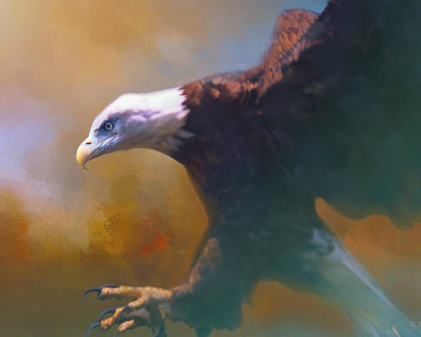 Eagle Poster featuring the photograph Bald Eagle Landing by Barbara Hymer