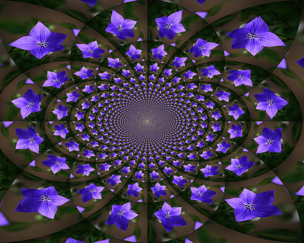 Balloon Flower Poster featuring the photograph Balloon Flower Kaleidoscope by Teresa Mucha