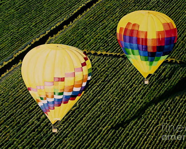 Landscapes Poster featuring the painting Balloons Over Napa Valley by Cindy Lee Longhini