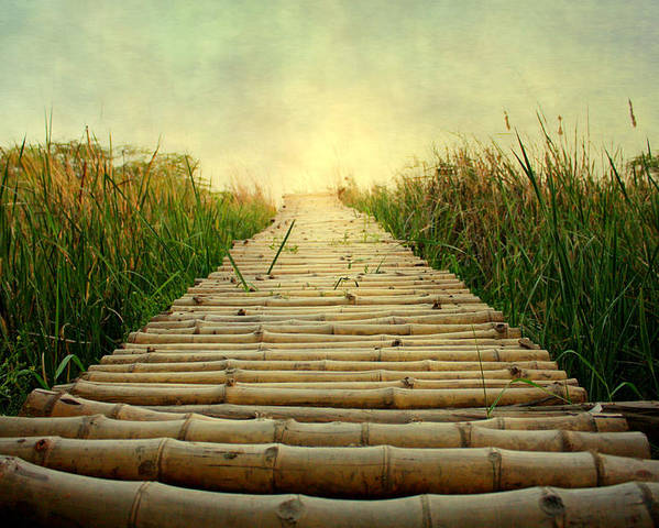 Horizontal Poster featuring the photograph Bamboo Path In Grass At Sunrise by Atul Tater